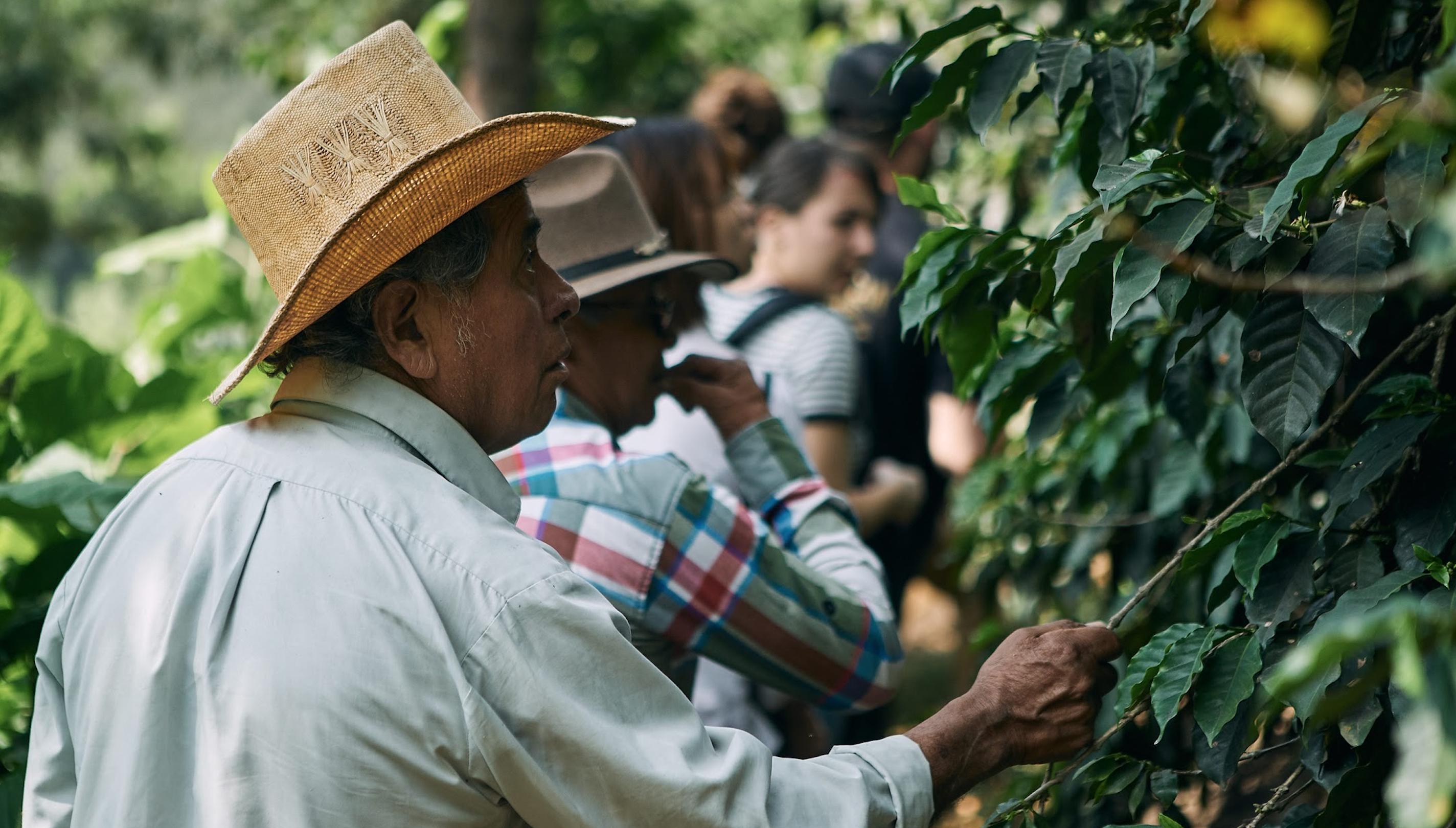 Coffee Farmer in Yepocapa